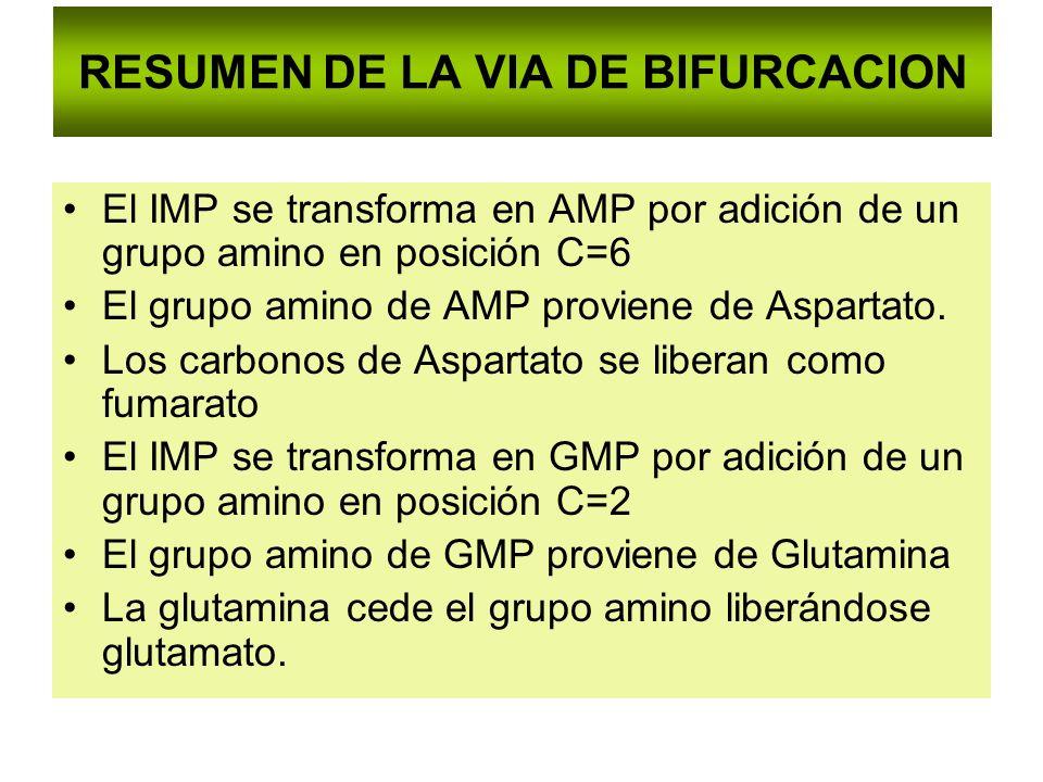RESUMEN DE LA VIA DE BIFURCACION El IMP se transforma en AMP por adición de un grupo amino en posición C=6 El grupo amino de AMP proviene de Aspartato