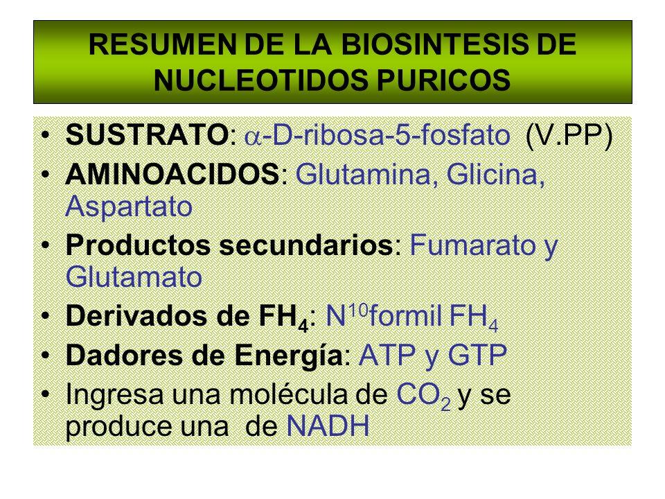 RESUMEN DE LA BIOSINTESIS DE NUCLEOTIDOS PURICOS SUSTRATO: -D-ribosa-5-fosfato (V.PP) AMINOACIDOS: Glutamina, Glicina, Aspartato Productos secundarios