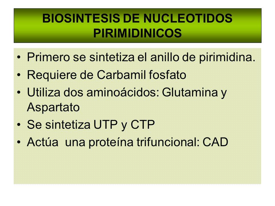 Primero se sintetiza el anillo de pirimidina. Requiere de Carbamil fosfato Utiliza dos aminoácidos: Glutamina y Aspartato Se sintetiza UTP y CTP Actúa