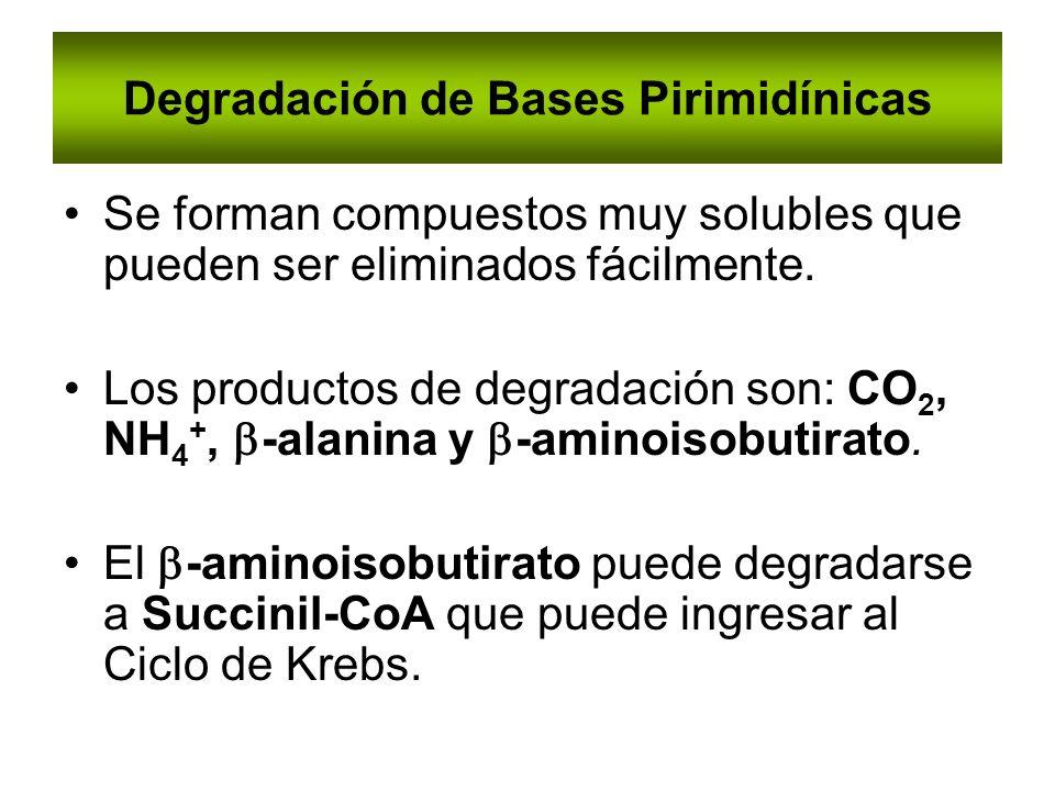 Degradación de Bases Pirimidínicas Se forman compuestos muy solubles que pueden ser eliminados fácilmente. Los productos de degradación son: CO 2, NH