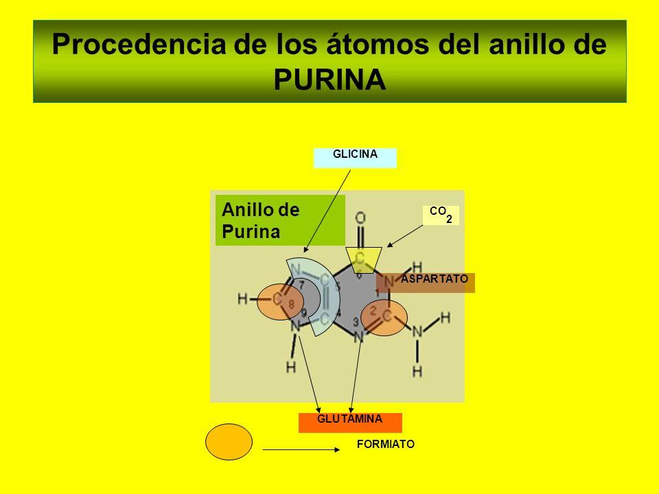 Procedencia de los átomos del anillo de PURINA Anillo de Purina GLUTAMINA FORMIATO ASPARTATO GLICINA CO 2