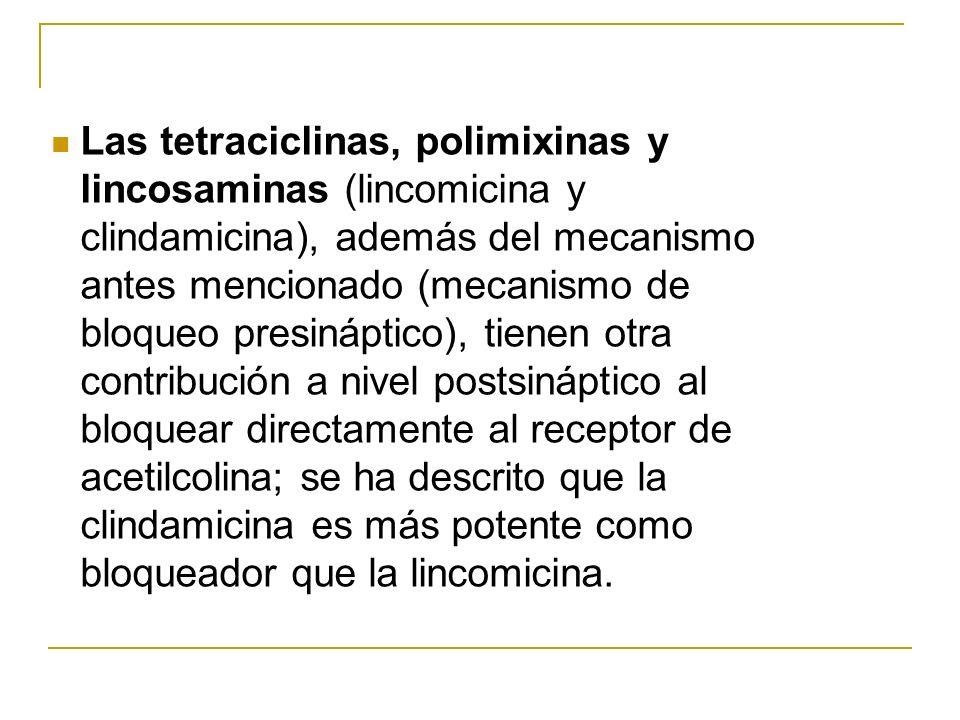 Las tetraciclinas, polimixinas y lincosaminas (lincomicina y clindamicina), además del mecanismo antes mencionado (mecanismo de bloqueo presináptico),