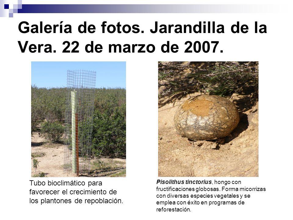 Galería de fotos. Jarandilla de la Vera. 22 de marzo de 2007. Tubo bioclimático para favorecer el crecimiento de los plantones de repoblación. Pisolit
