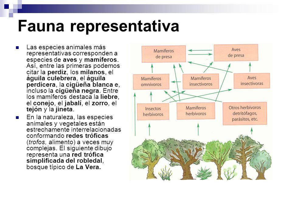 Fauna representativa Las especies animales más representativas corresponden a especies de aves y mamíferos. Así, entre las primeras podemos citar la p