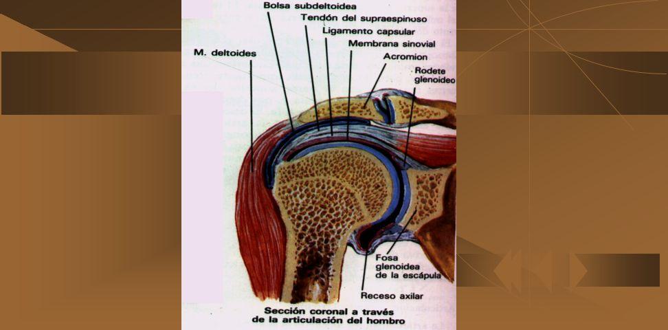 - Paciente con síndrome de hombro doloroso - Paciente con radiografías de hombros normales - Paciente con pruebas clínicas positivas que indiquen enfe