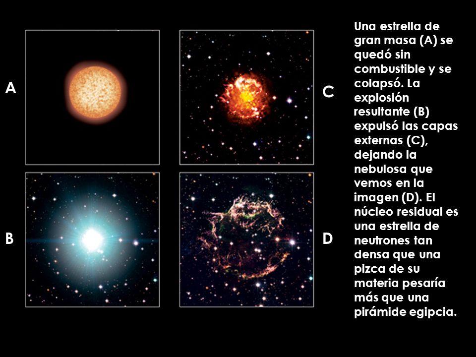 A B C D Una estrella de gran masa (A) se quedó sin combustible y se colapsó. La explosión resultante (B) expulsó las capas externas (C), dejando la ne