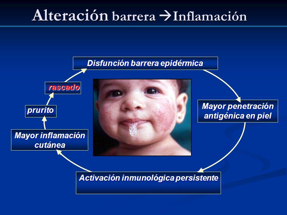 Alteración barrera Inflamación Disfunción barrera epidérmica Activación inmunológica persistente prurito Mayor inflamación cutánea Mayor penetración a