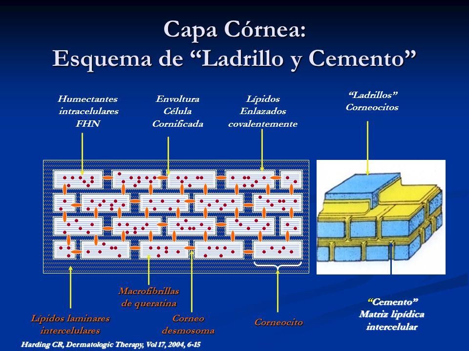 Capa Córnea: Esquema de Ladrillo y Cemento Humectantes intracelulares FHN Lípidos laminares intercelularesCorneodesmosoma Corneocito Macrofibrillas de