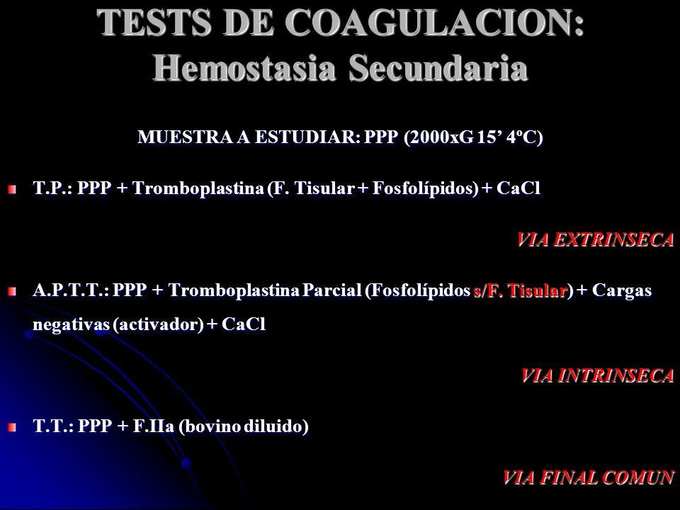 TESTS DE COAGULACION: Hemostasia Secundaria MUESTRA A ESTUDIAR: PPP (2000xG 15 4ºC) T.P.: PPP + Tromboplastina (F. Tisular + Fosfolípidos) + CaCl VIA