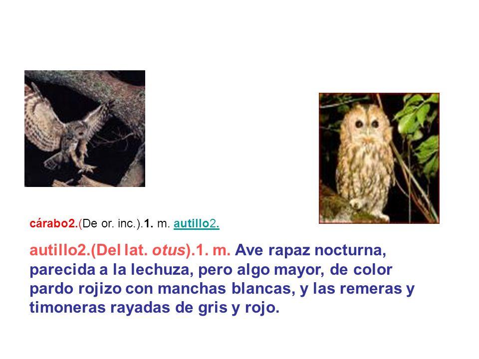 cárabo2.(De or. inc.).1. m. autillo2.autillo2. autillo2.(Del lat. otus).1. m. Ave rapaz nocturna, parecida a la lechuza, pero algo mayor, de color par
