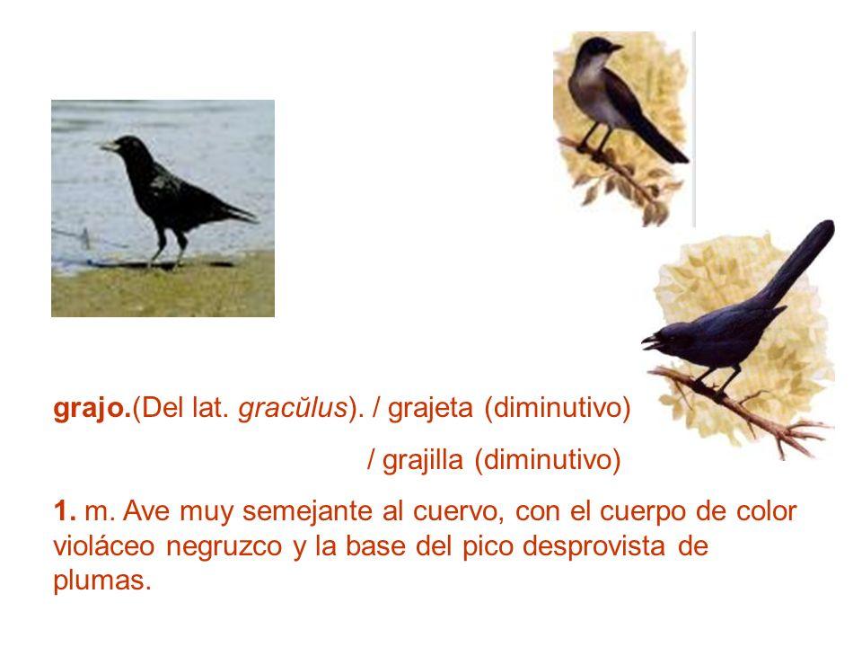 grajo.(Del lat. gracŭlus). / grajeta (diminutivo) / grajilla (diminutivo) 1. m. Ave muy semejante al cuervo, con el cuerpo de color violáceo negruzco