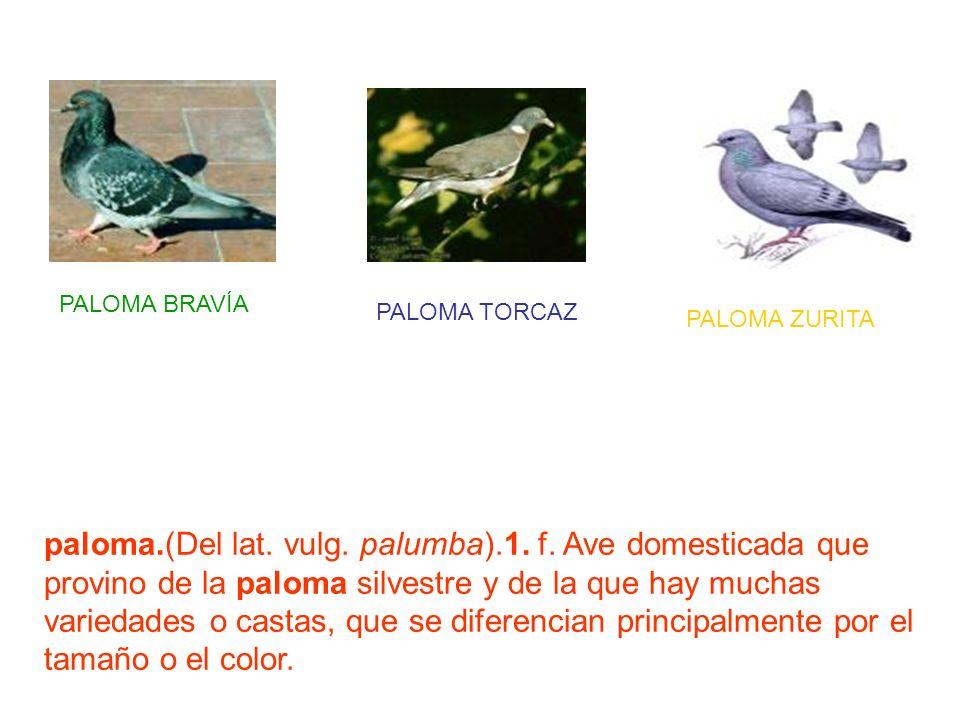 paloma.(Del lat. vulg. palumba).1. f. Ave domesticada que provino de la paloma silvestre y de la que hay muchas variedades o castas, que se diferencia