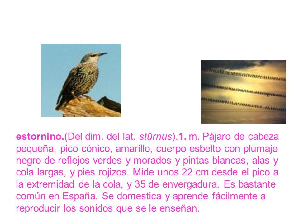 estornino.(Del dim. del lat. stŭrnus).1. m. Pájaro de cabeza pequeña, pico cónico, amarillo, cuerpo esbelto con plumaje negro de reflejos verdes y mor