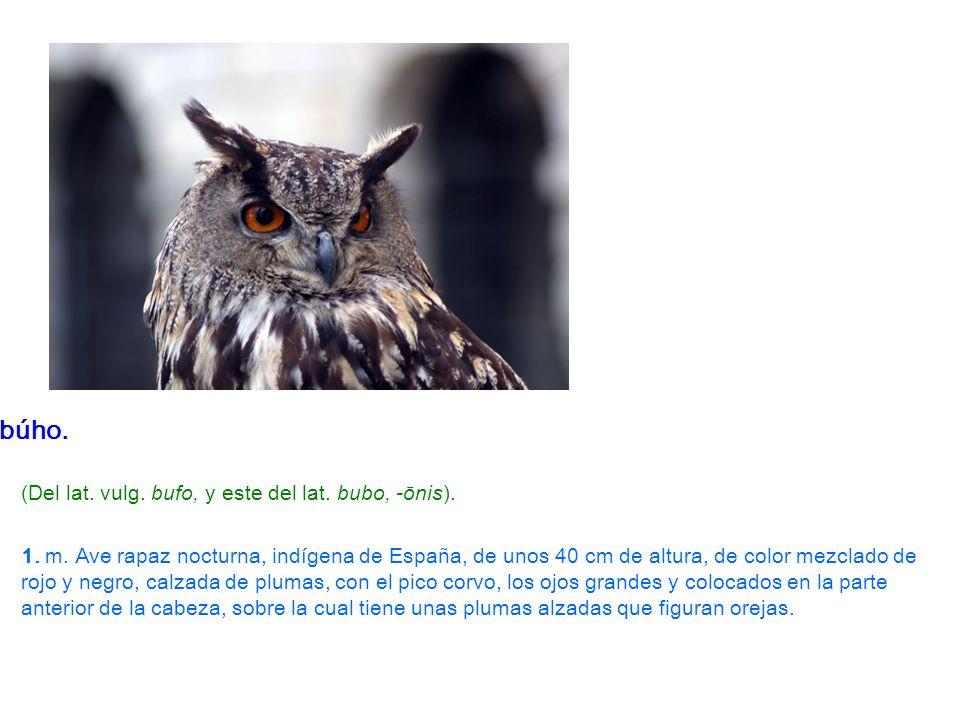 búho. (Del lat. vulg. bufo, y este del lat. bubo, -ōnis). 1. m. Ave rapaz nocturna, indígena de España, de unos 40 cm de altura, de color mezclado de