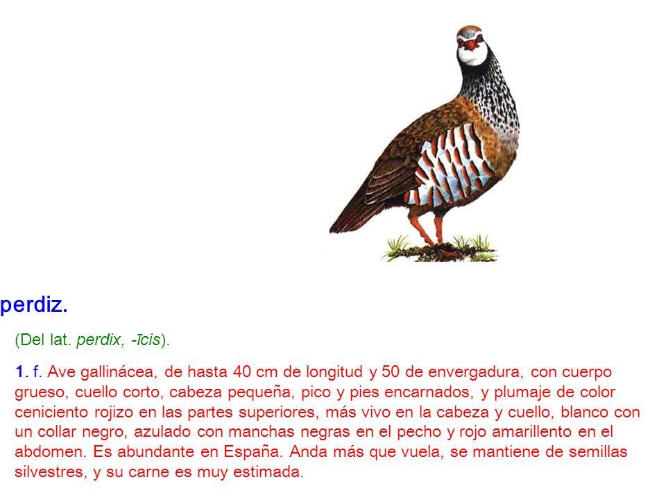perdiz. (Del lat. perdix, -īcis). 1. f. Ave gallinácea, de hasta 40 cm de longitud y 50 de envergadura, con cuerpo grueso, cuello corto, cabeza pequeñ