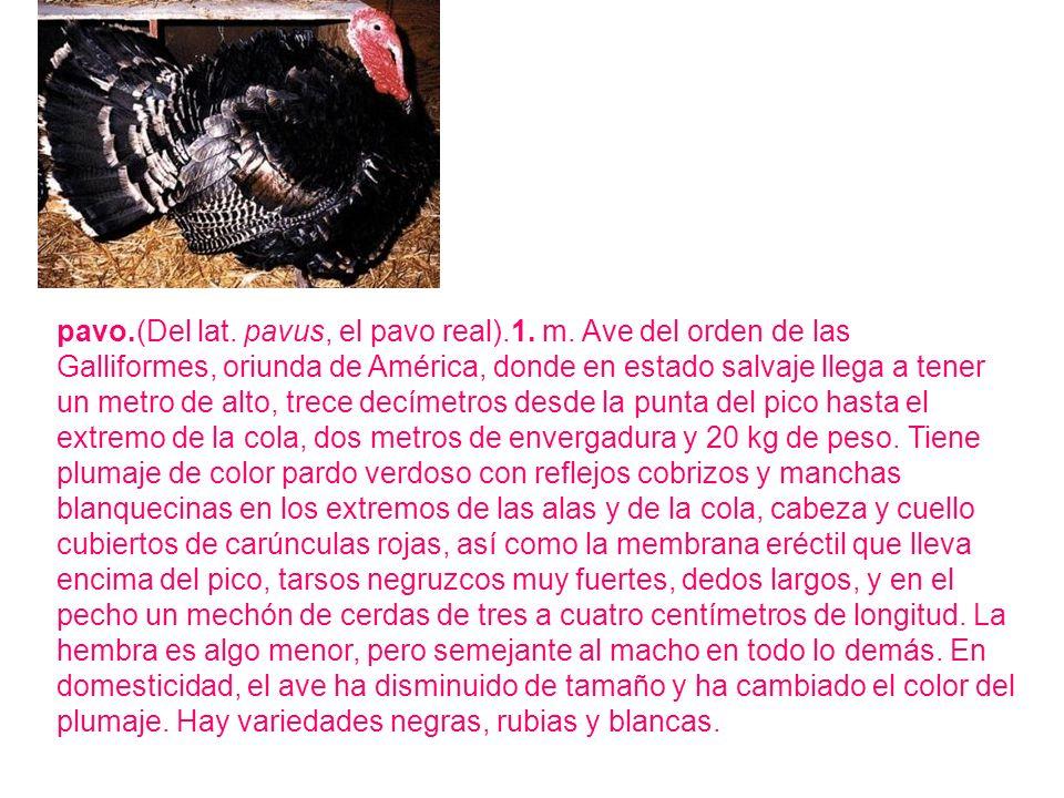 pavo.(Del lat. pavus, el pavo real).1. m. Ave del orden de las Galliformes, oriunda de América, donde en estado salvaje llega a tener un metro de alto