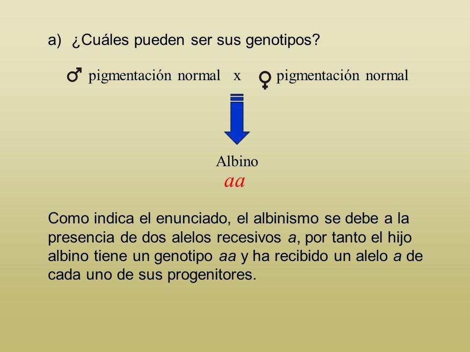 Problema 2 En el hombre, el albinismo (falta de pigmentación) es el resultado de dos alelos recesivos, a, y la pigmentación, carácter normal, viene de