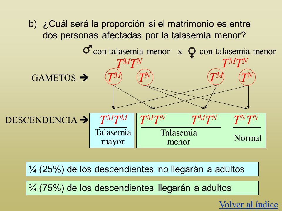 a)¿Qué proporción de los hijos de un matrimonio entre un hombre normal y una mujer afectada con talasemia menor llegarán a adultos? El 100% de los des