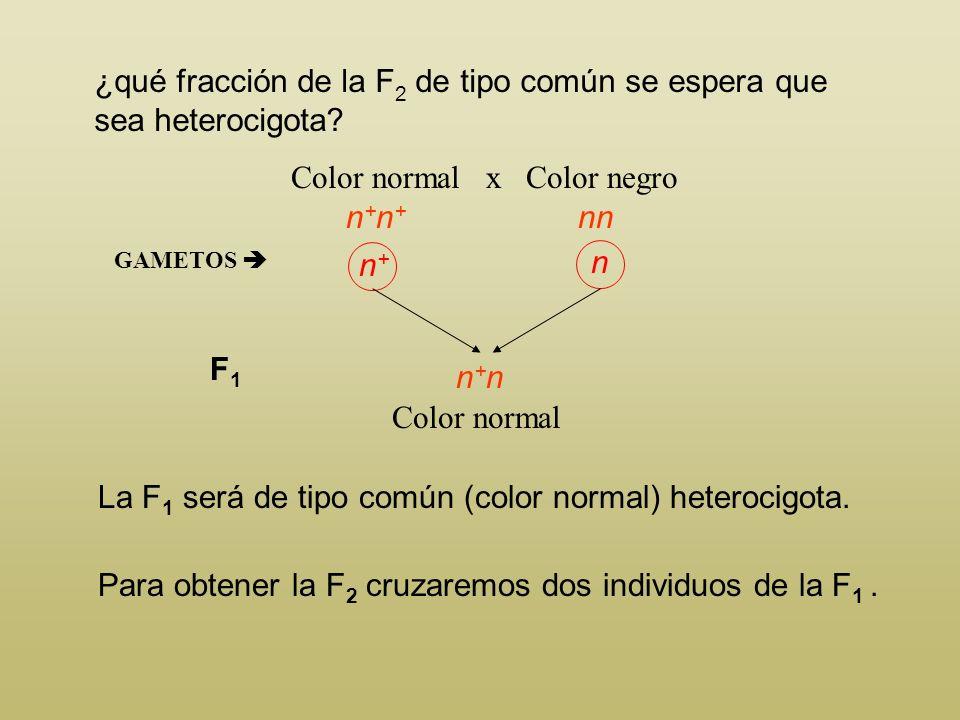 ¿qué fracción de la F 2 de tipo común se espera que sea heterocigota? Color normal x Color negro La mosca de color negro solo puede ser homocigota nn,