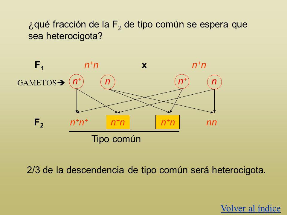 ¿qué fracción de la F 2 de tipo común se espera que sea heterocigota? Color normal x Color negro La F 1 será de tipo común (color normal) heterocigota