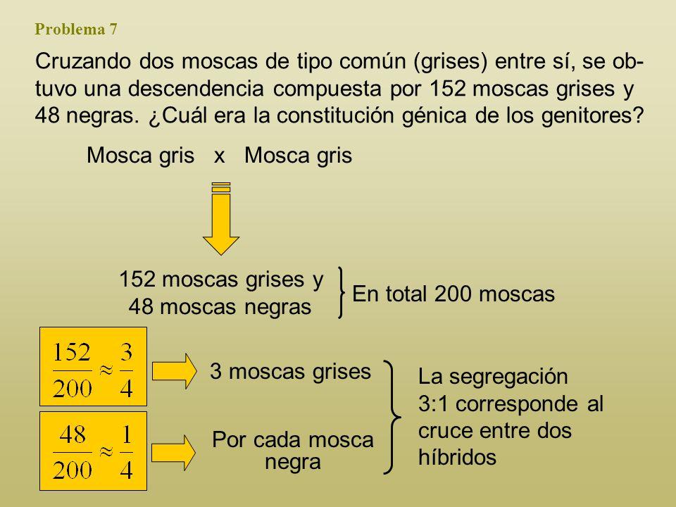 ¿qué fracción de la F 2 de tipo común se espera que sea heterocigota? 2/3 de la descendencia de tipo común será heterocigota. n+nn+nn+nn+nF1F1 x GAMET