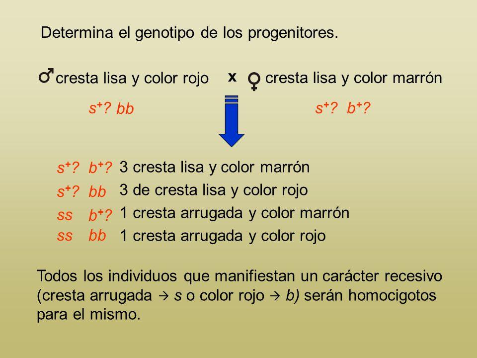 Determina el genotipo de los progenitores. cresta lisa y color marrón 3 cresta lisa y color marrón 3 de cresta lisa y color rojo 1 cresta arrugada y c