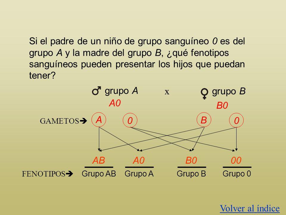 Si el padre de un niño de grupo sanguíneo 0 es del grupo A y la madre del grupo B, ¿qué fenotipos sanguíneos pueden presentar los hijos que puedan ten