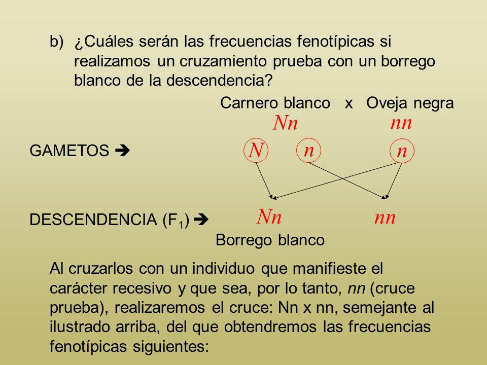 b)¿Cuáles serán las frecuencias fenotípicas si realizamos un cruzamiento prueba con un borrego blanco de la descendencia? Carnero blanco x Oveja negra