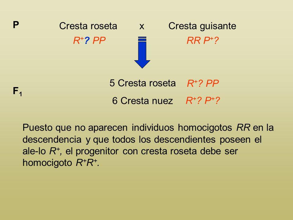 Cresta roseta x Cresta guisante P R + ? PPRR P + ? 5 Cresta roseta 6 Cresta nuez F1F1 R + ? PP R + ? P + ? El individuo con cresta en nuez deben tener