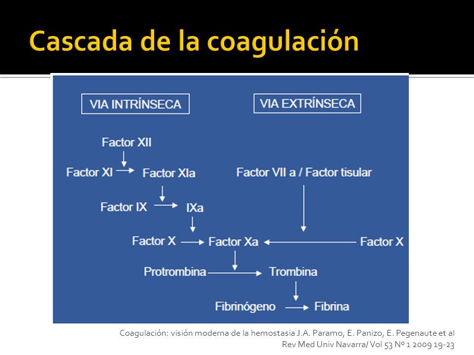Coagulación: visión moderna de la hemostasia J.A. Paramo, E. Panizo, E. Pegenaute et al Rev Med Univ Navarra/ Vol 53 Nº 1 2009 19-23