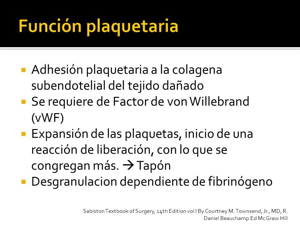 Adhesión plaquetaria a la colagena subendotelial del tejido dañado Se requiere de Factor de von Willebrand (vWF) Expansión de las plaquetas, inicio de