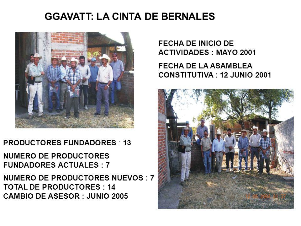GGAVATT: LA CINTA DE BERNALES PRODUCTORES FUNDADORES : 13 NUMERO DE PRODUCTORES FUNDADORES ACTUALES : 7 NUMERO DE PRODUCTORES NUEVOS : 7 TOTAL DE PROD
