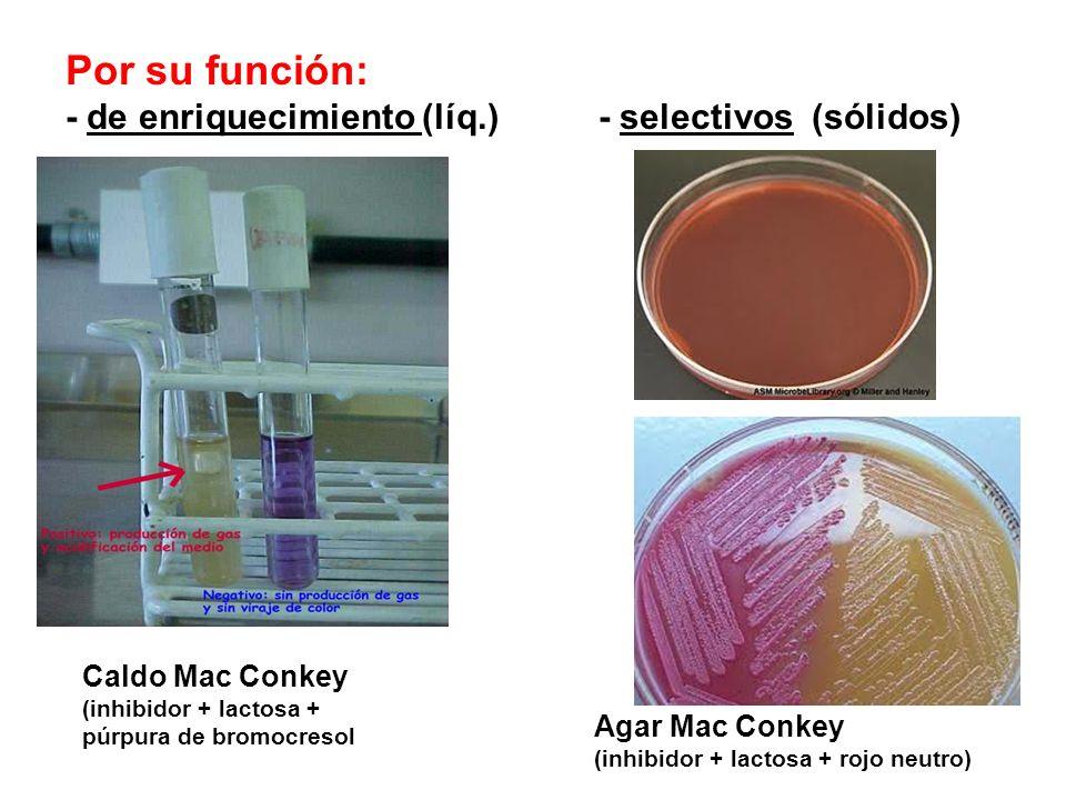 Por su función: - de enriquecimiento (líq.) - selectivos(sólidos) Caldo Mac Conkey (inhibidor + lactosa + púrpura de bromocresol Agar Mac Conkey (inhi