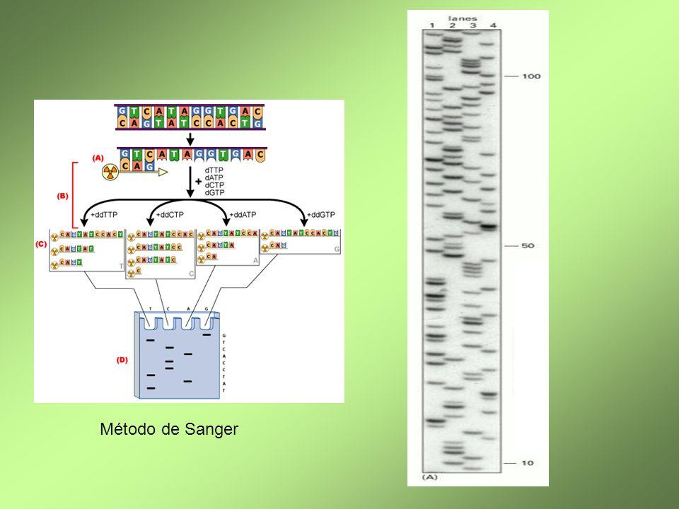 Método de Sanger