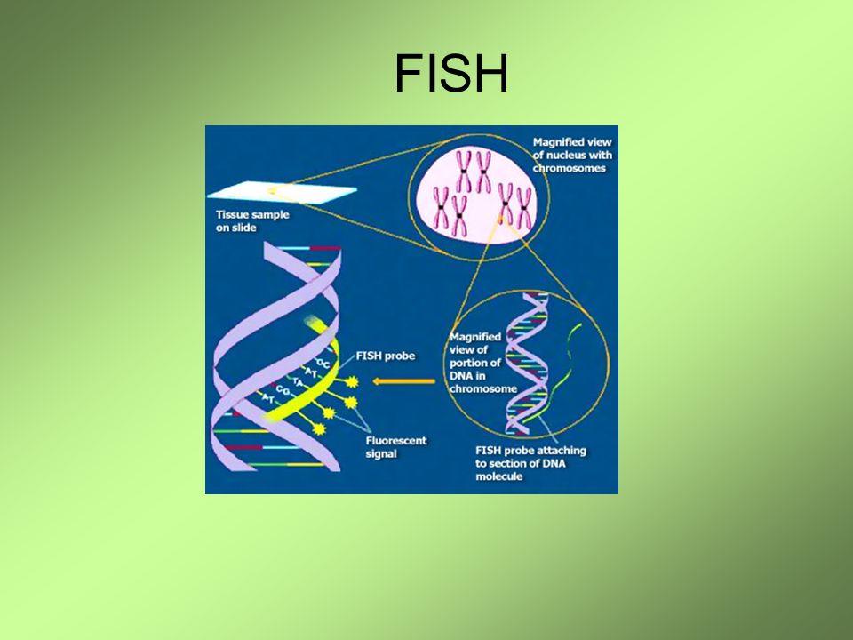 Detección de translocaciones Estudios de cariotipo Cromosomas marcados con sondas teloméricas Y un colado!!!!.
