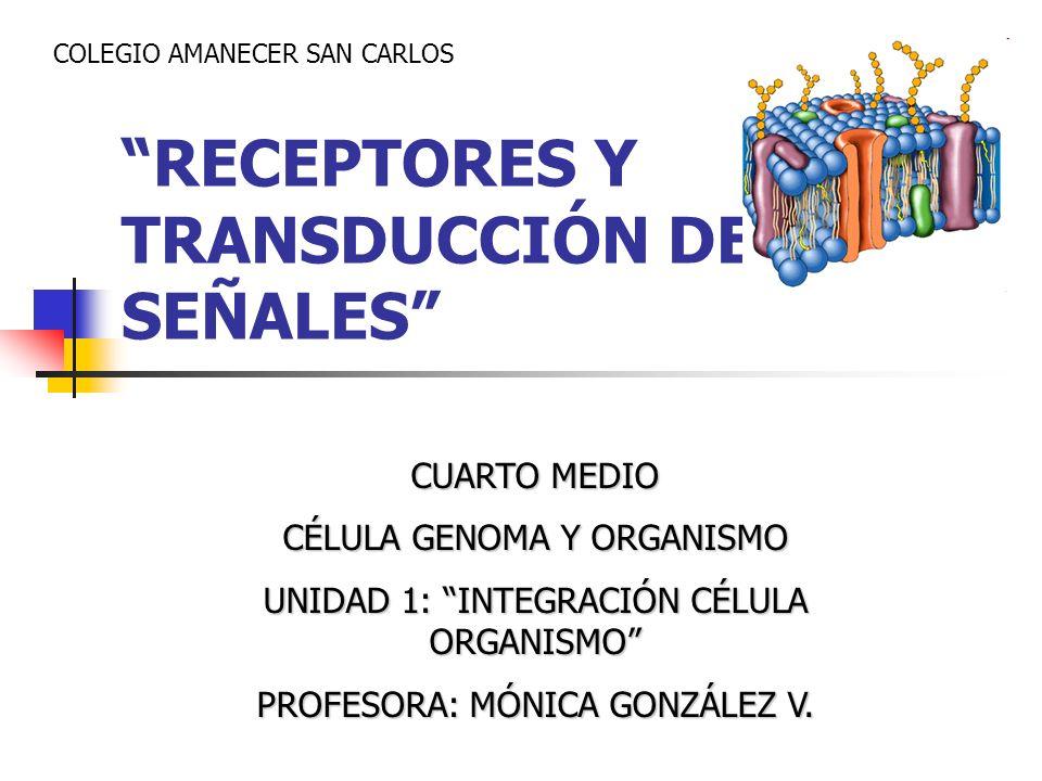 RECEPTORES Y TRANSDUCCIÓN DE SEÑALES CUARTO MEDIO CÉLULA GENOMA Y ORGANISMO UNIDAD 1: INTEGRACIÓN CÉLULA ORGANISMO PROFESORA: MÓNICA GONZÁLEZ V. COLEG