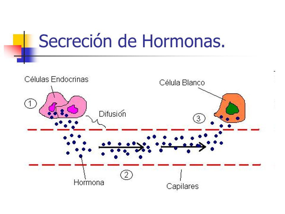 Secreción de Hormonas.
