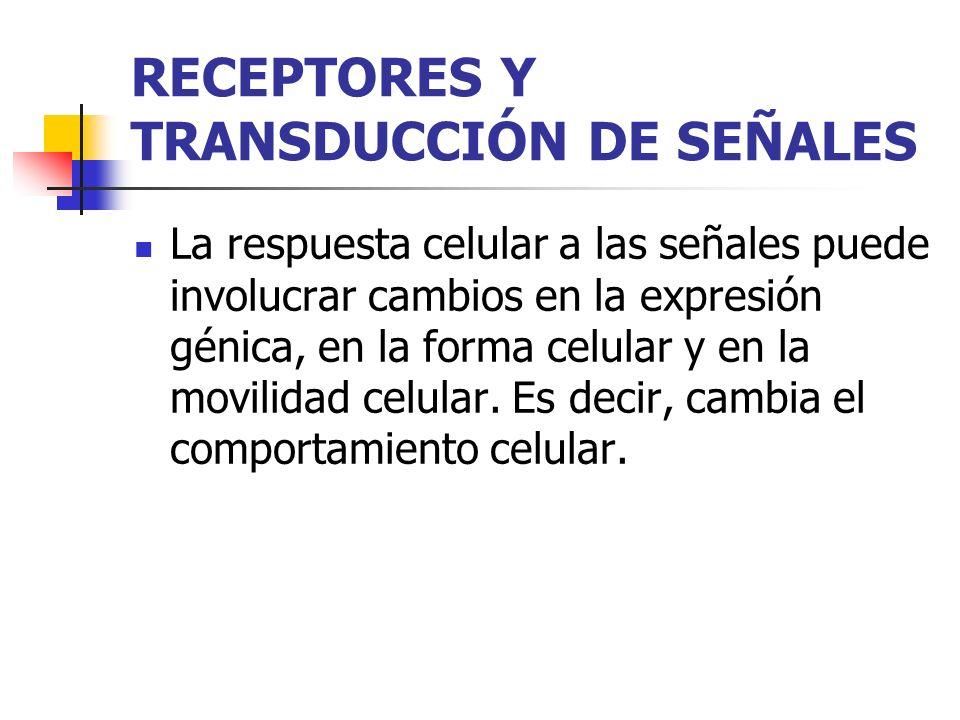 RECEPTORES Y TRANSDUCCIÓN DE SEÑALES La respuesta celular a las señales puede involucrar cambios en la expresión génica, en la forma celular y en la m