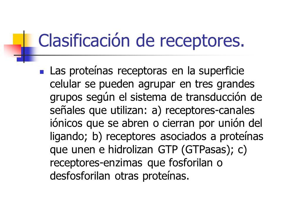 Clasificación de receptores. Las proteínas receptoras en la superficie celular se pueden agrupar en tres grandes grupos según el sistema de transducci