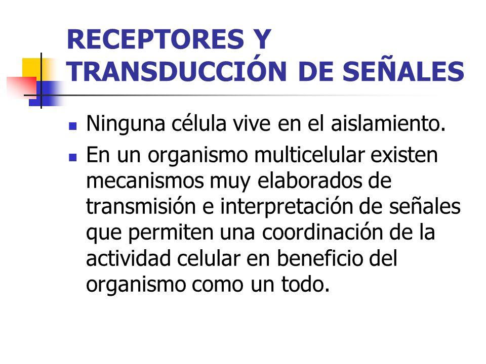 RECEPTORES Y TRANSDUCCIÓN DE SEÑALES Las señales intercelulares son interpretadas por una maquinaria compleja en la célula que responde a ellas.
