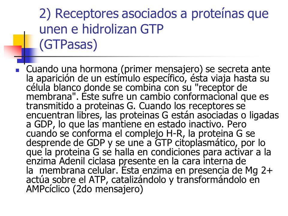 Cuando una hormona (primer mensajero) se secreta ante la aparición de un estímulo específico, ésta viaja hasta su célula blanco donde se combina con s