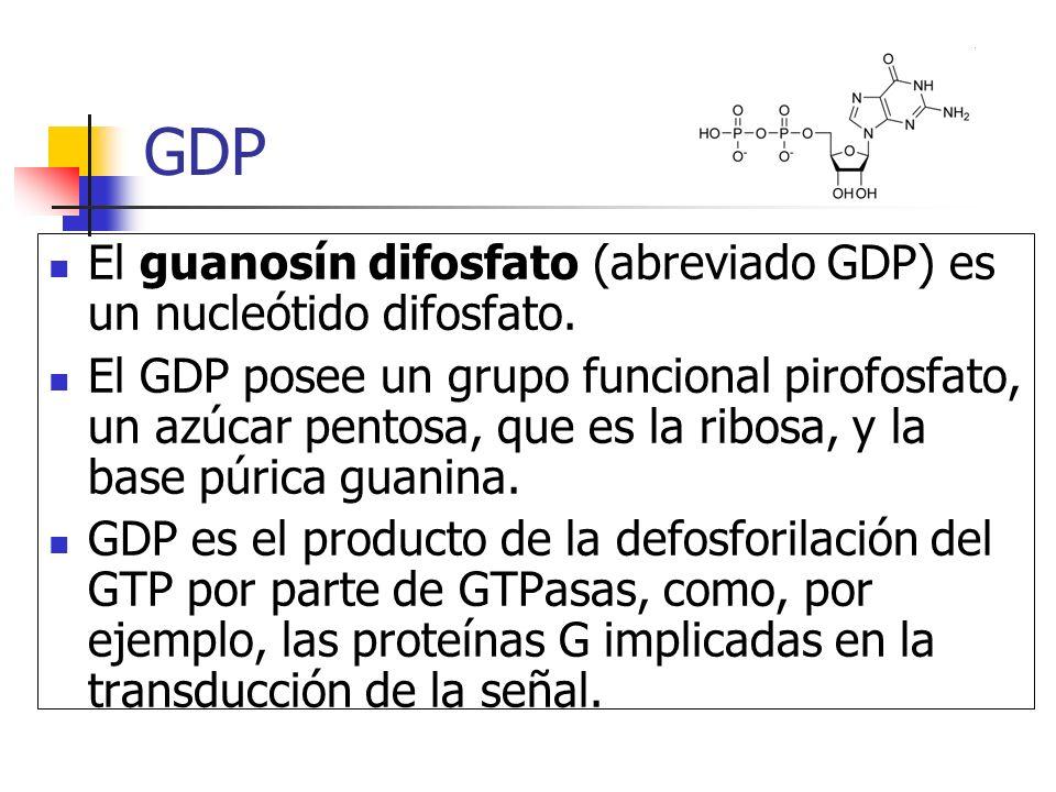 GDP El guanosín difosfato (abreviado GDP) es un nucleótido difosfato. El GDP posee un grupo funcional pirofosfato, un azúcar pentosa, que es la ribosa