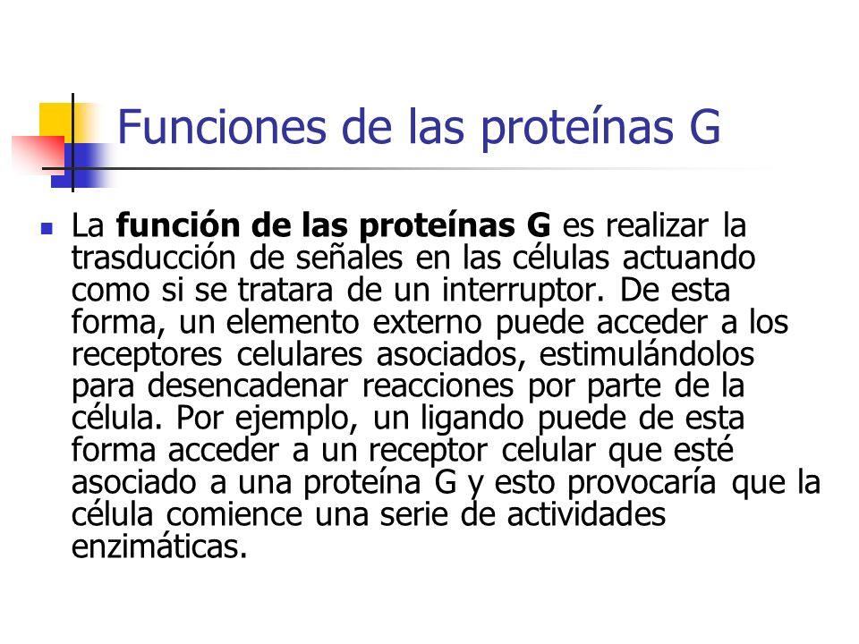 Funciones de las proteínas G La función de las proteínas G es realizar la trasducción de señales en las células actuando como si se tratara de un inte