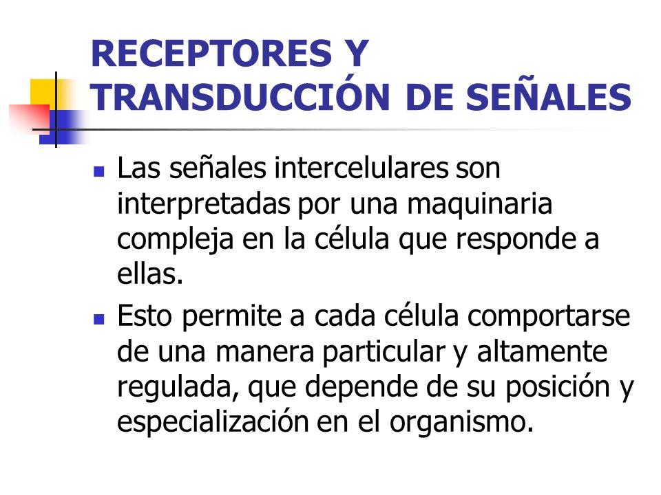 RECEPTORES Y TRANSDUCCIÓN DE SEÑALES Las señales intercelulares son interpretadas por una maquinaria compleja en la célula que responde a ellas. Esto