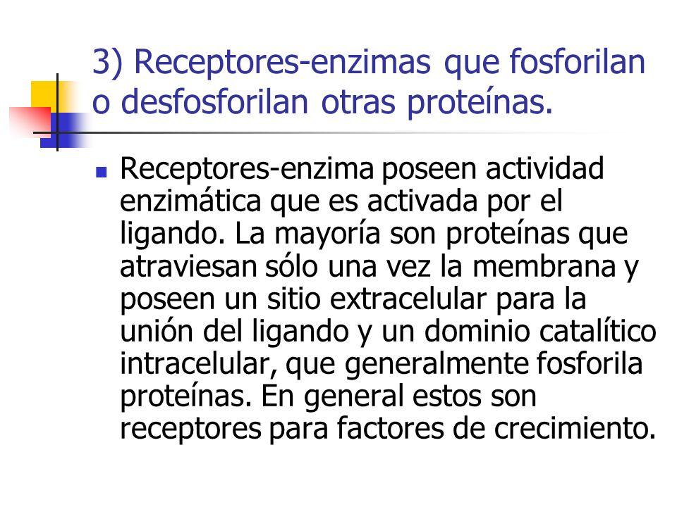 3) Receptores-enzimas que fosforilan o desfosforilan otras proteínas. Receptores-enzima poseen actividad enzimática que es activada por el ligando. La