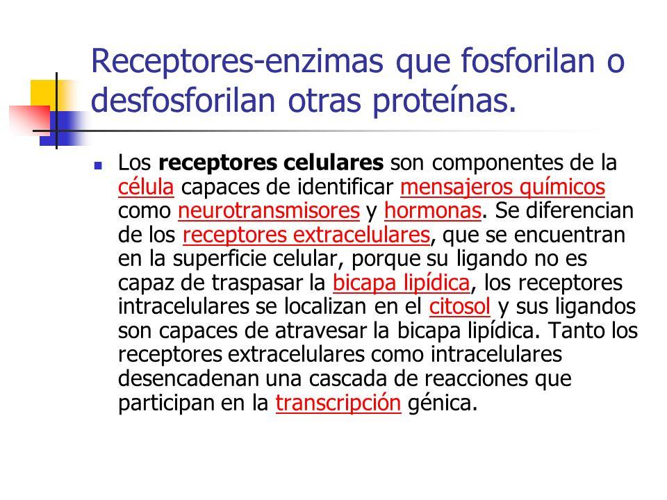 Receptores-enzimas que fosforilan o desfosforilan otras proteínas. Los receptores celulares son componentes de la célula capaces de identificar mensaj
