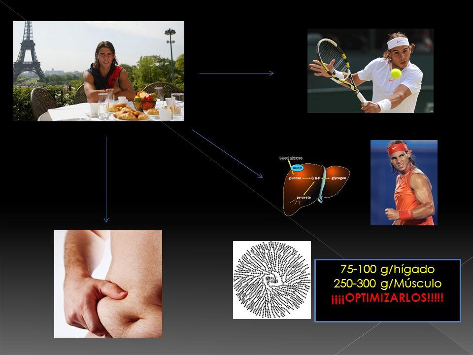 Músculo esquelético Músculo cardíaco Tejido adiposo Anabolismo muscular Lipogénesis Glucogenogénesis