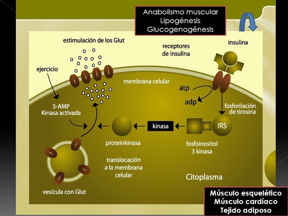 Monosacáridos = glucosa, fructosa y galactosa Disacáridos Sacarosa: glucosa + fructosa Lactosa: glucosa + galactosa Maltosa: glucosa + glucosa Oligosacáridos = hasta 20 monosacáridos Maltodextrina= hidrólisis almidón, 5-10 glucosas.