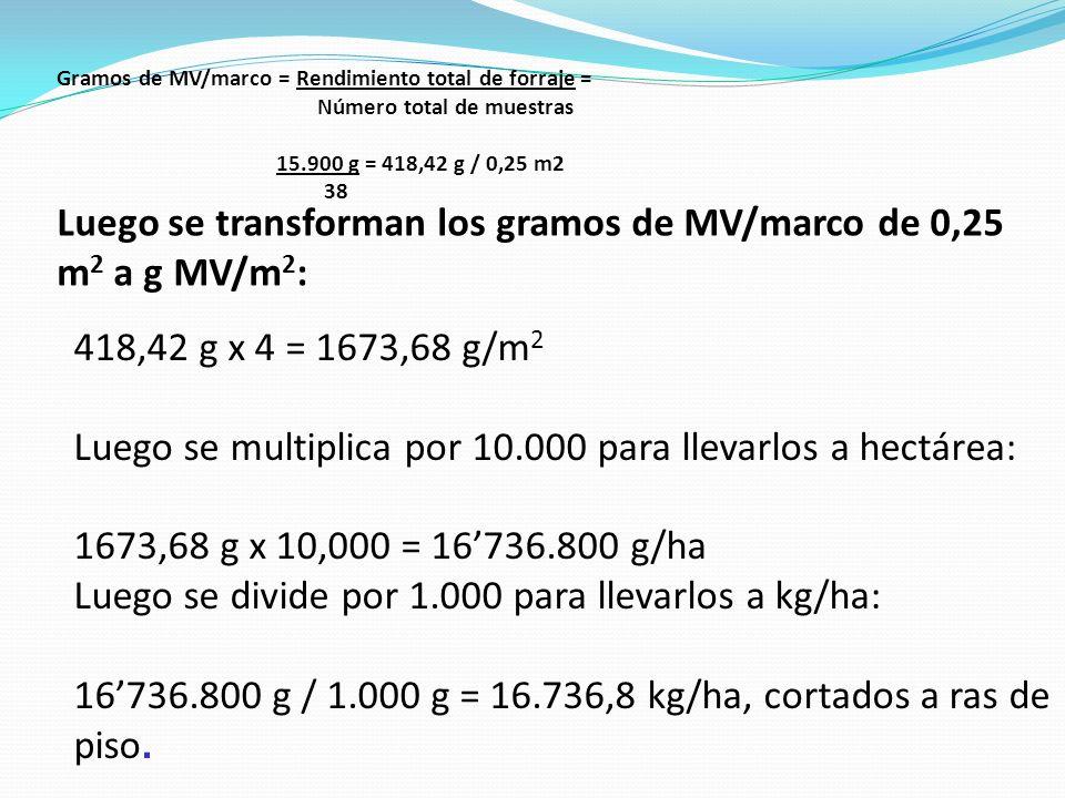 Gramos de MV/marco = Rendimiento total de forraje = Número total de muestras 15.900 g = 418,42 g / 0,25 m2 38 Luego se transforman los gramos de MV/ma