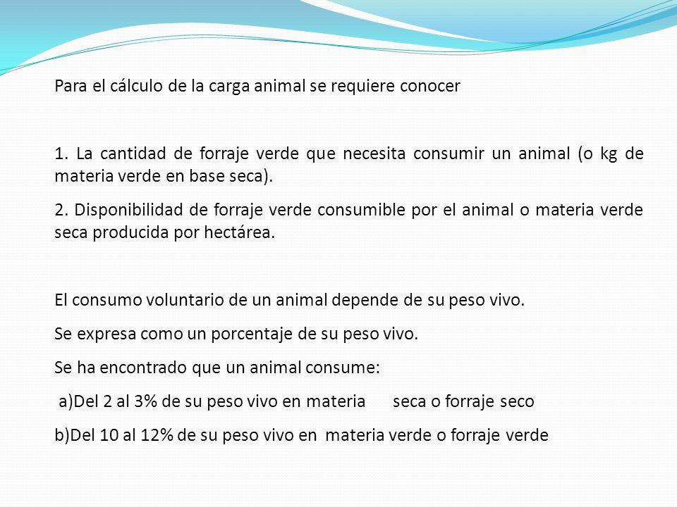 Con este dato se procede a calcular la materia verde por hectárea: 16.736,8 kg /ha x 41,5 = 6.945,77 kg / ha de material verde 100 Cálculo de la carga animal Para el cálculo de la carga animal, en términos de peso vivo total para la rotación, se procede así: Si la rotación es de 15 potreros de una hectárea y se maneja con 3 días de ocupación y 42 de descanso y una asignación diaria (presión de pastoreo) de 30 kg de MV/100 kg de peso vivo/día, Entonces: Peso vivo para la rotación = MV (kg/ha) x Área de la rotación (ha) x 100 kg (PO + PD) (día) x Asignación diaria (kg de MV/día) P V = 6.945,77 kg MV/ha x 15 ha x 100 kg = 10418.655 = 7.717.5 kg de PV (3 + 42) días x 30 kg MV/día 1350 Si se dispone de animales de 250 kg de peso vivo en promedio, entonces: 7.717,5 kg = 30,8 = 39 animales para la rotación.